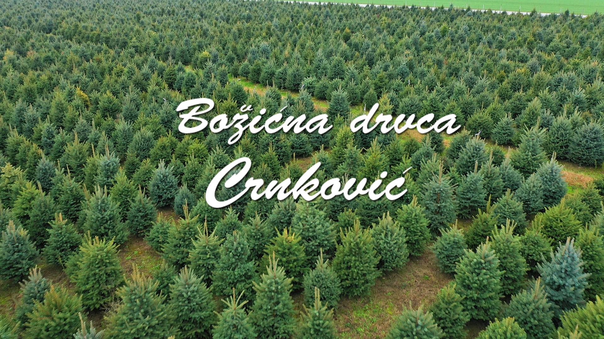Božićna drvca Crnković